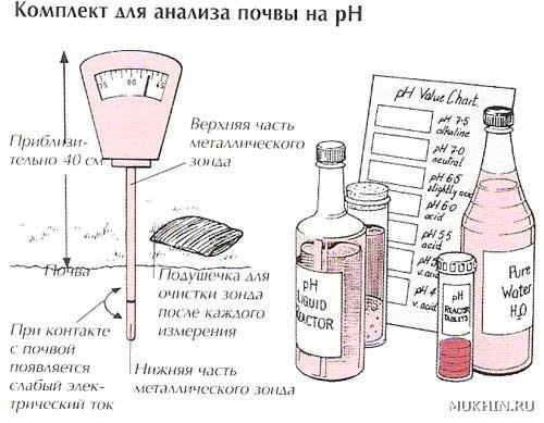 Как определить химический состав почвы в домашних условиях - Val-spb.ru